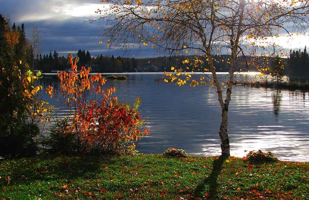 река осень пейзаж деревья вода